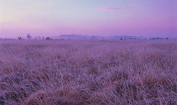 Strabrechtse Heide 170 sur Desh amer