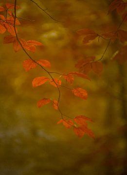 Herfst van Minie Drost
