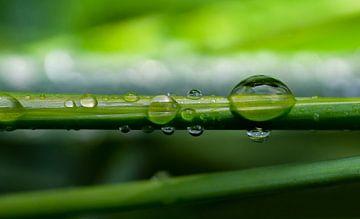 Wassertropfen auf einem Grashalm von Peter Heeling