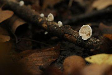 Een heel kleine paddenstoel op een heel klein takje van Charissa Oudejans