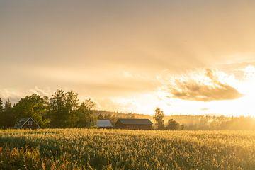 Schwedischer Bauernhof bei Sonnenuntergang. von Axel Weidner
