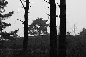 De boom van Joyce Pals