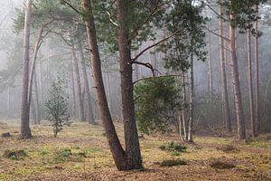 Den in de mist op de Utrechtse Heuvelrug, Nederland van Sjaak den Breeje Landschapsfotografie