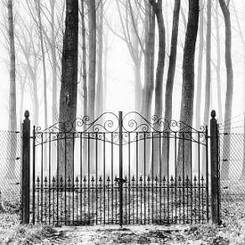 Gesloten poort in de mist van Ellen Driesse