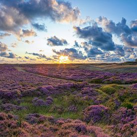 Blühende Heide auf Texel. von Justin Sinner Pictures ( Fotograaf op Texel)