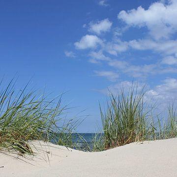 Dunes sur Ostsee Bilder
