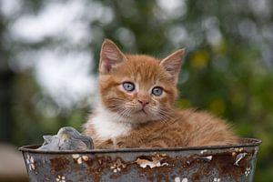 Kitten in een mandje