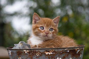 Kätzchen im Korb von Jan Jongejan
