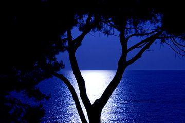 Silhouet von Michel Van Nederveen