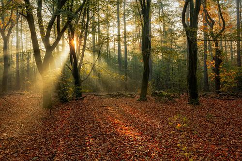 Herbst Wald Nimmerdor Amersfoort