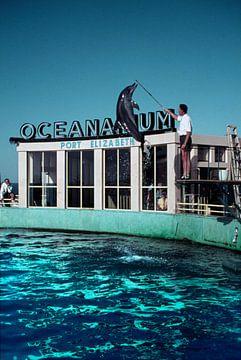 Oceanarium Port Elizabeth Zuid-Afrika jaren '50 van Timeview Vintage Images
