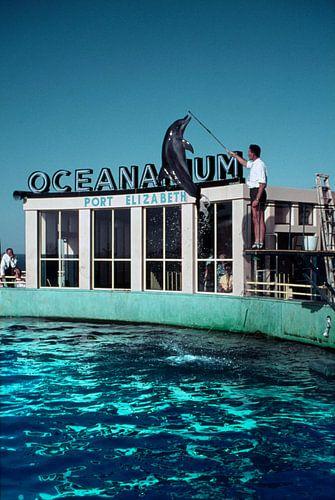 Ozeanarium Port Elizabeth in Südafrika der 1950er Jahre von