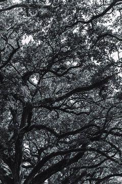Zwart wit beeld van eikentakken en bladeren van Moniek Kuipers