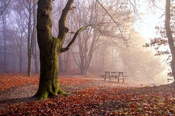 Tafel in de mist op de Noordberg van Robbert van Rijsewijk