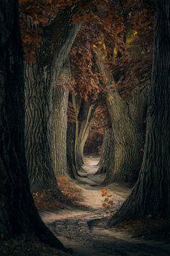 Regensburg, Duitsland, hetzelfde oude pad... van Martin Podt