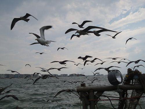 Meeuwen in volle zee van