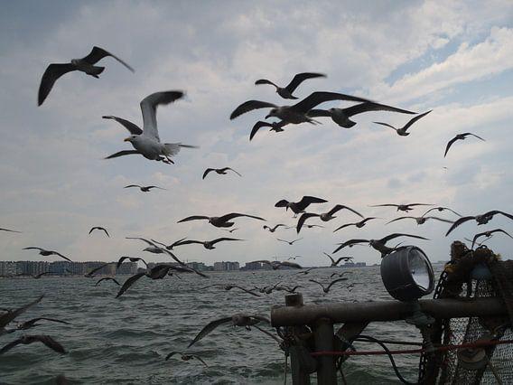 Meeuwen in volle zee