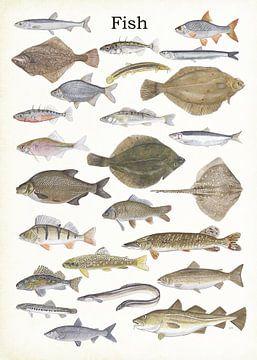 Fisch von Jasper de Ruiter