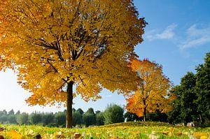 Herfst in Volendam van