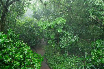 Regenwoud van Elles Rijsdijk