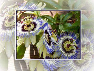 Blühten Collage van Gertrud Scheffler