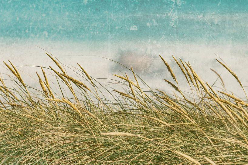 Dünenwind von Kirsten Warner