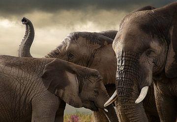 Elephant meeting  von Marcel van Balken