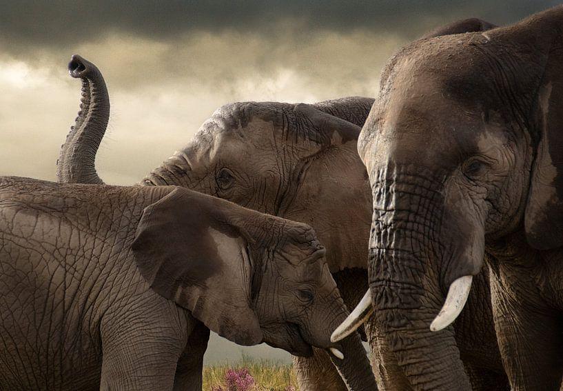 Drie olifanten van Marcel van Balken