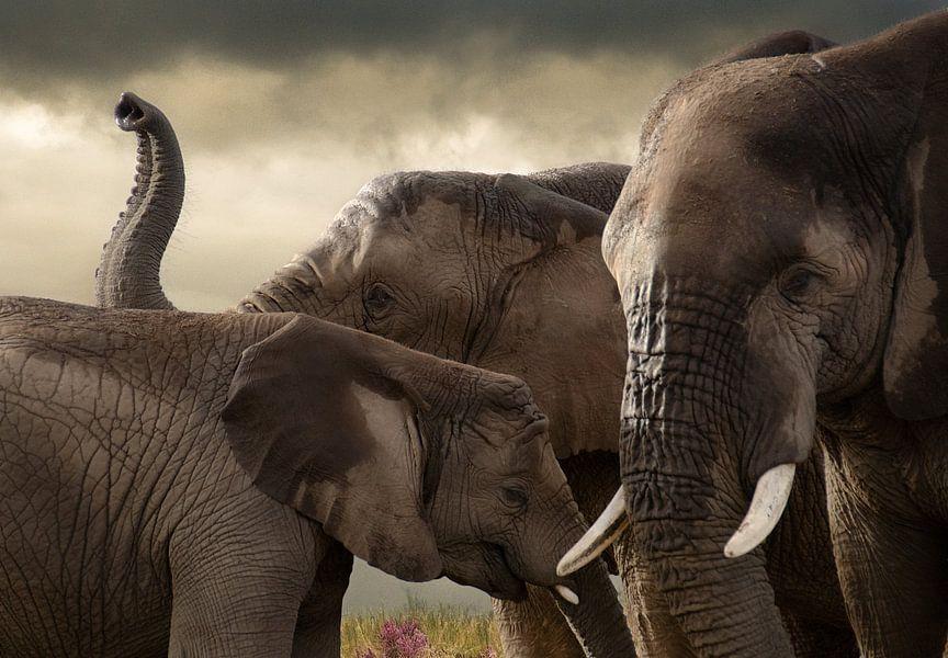 Drie olifanten