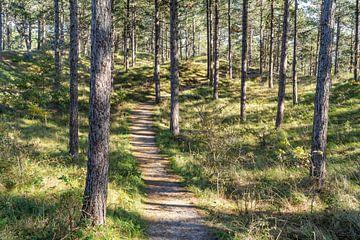 Spaziergang im Wald von Martijn Joosse