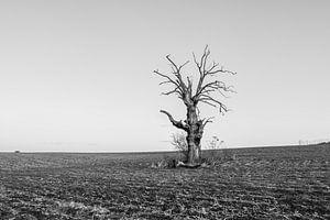 A Dead Tree van Jack Turner