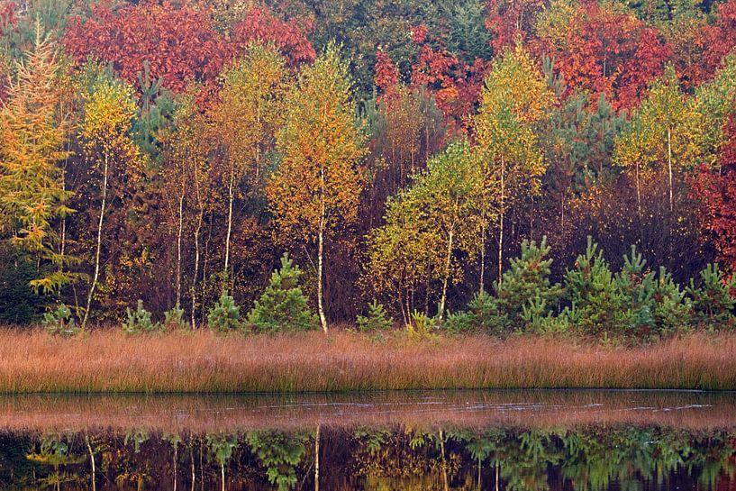 bomen in herfsttooi van Ronald Jansen