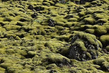 Isländischen Mooslandschaft in sattem Grün von Jutta Klassen