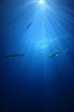 Unterwasser-Welt 10 von