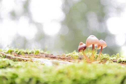 Een klein gezin | paddenstoelen op boomstam