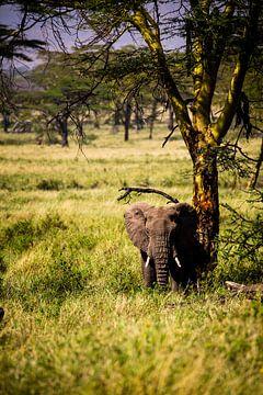 Olifanten in Tanzania von René Holtslag