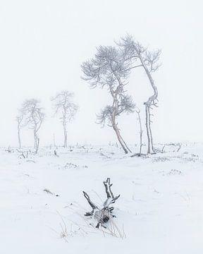 mistig sneeuwlandschap van Peter Poppe