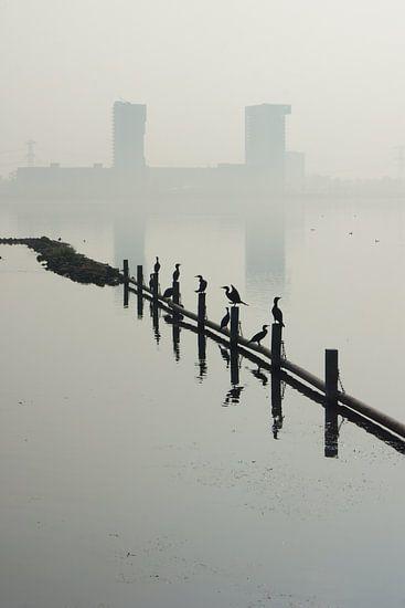 Zevenhuizerplas,  Rotterdam Nesselande