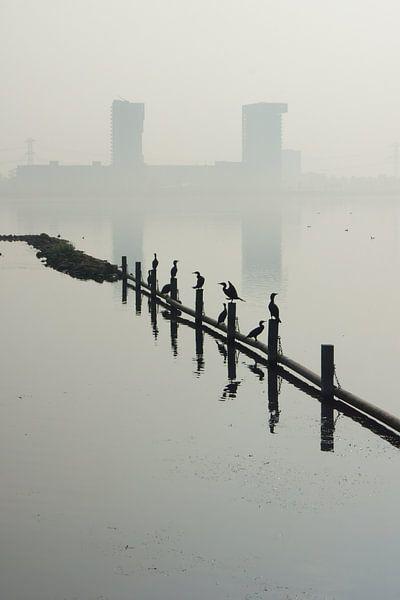 Zevenhuizerplas,  Rotterdam Nesselande van Michel van Kooten