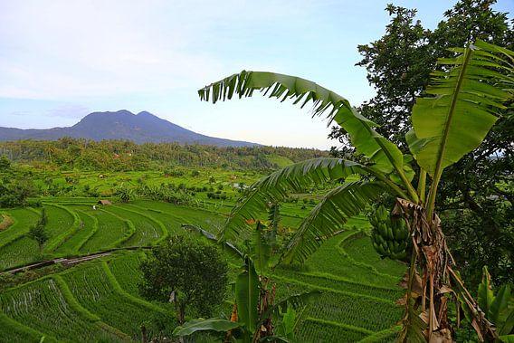 Bali rijstveld van Andre Bolte