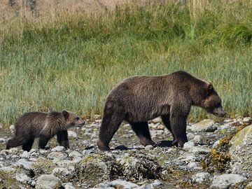 Grizzly Beer met jong von Muriel Polet