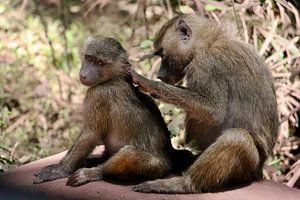 Monkey see Monkey do - Tanzania van Charrel Jalving