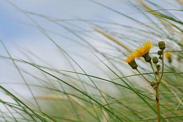 Dune grass van Jan Hagen