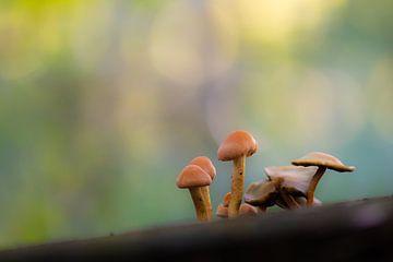 Pilze mit farbigem Hintergrund von Tania Perneel
