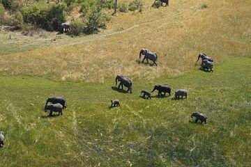 Olifanten in Chobe van Erna Haarsma-Hoogterp