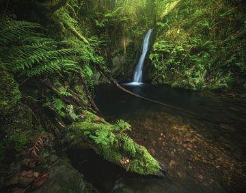 Asturien Cascada Gorgollon Wasserfall im Wald von Jean Claude Castor