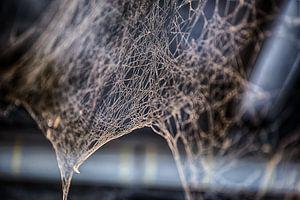 Cobweb von