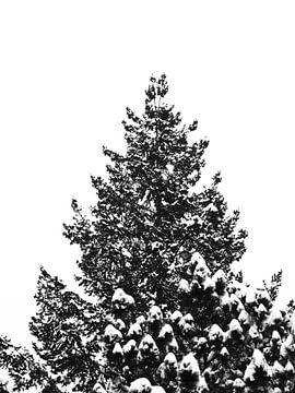 Ein Baumwipfel mit schneebedeckten Spitzen von Jörg Hausmann