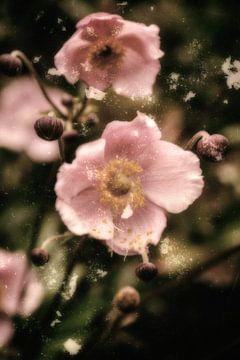In een pink jurk - Anemone van Christine Nöhmeier