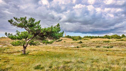 De duinen met zicht op de vuurtoren in Den Helder